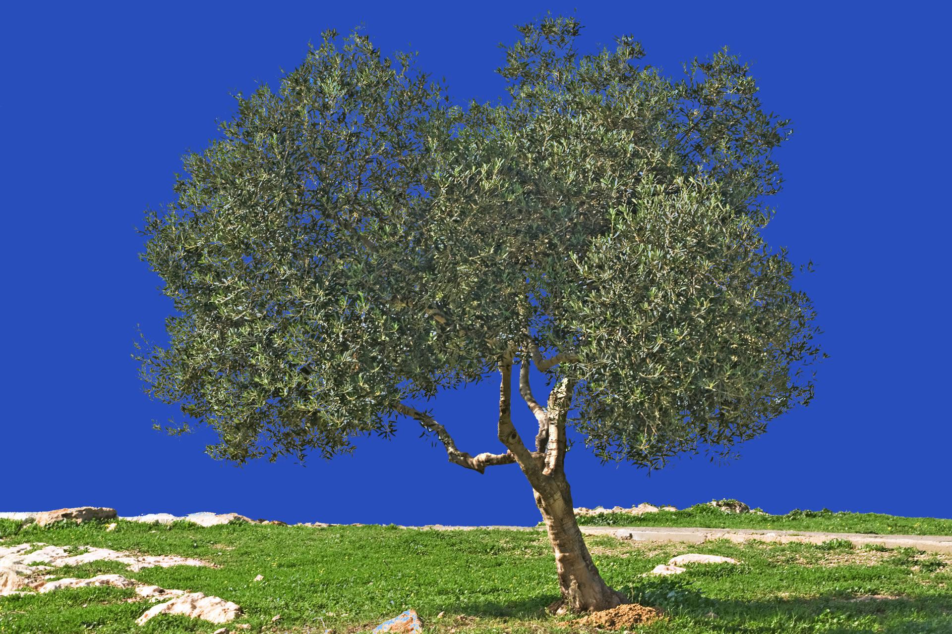 Acero verde